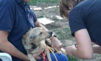 Hunde in der Toskana | Hundehilfe Mariechen