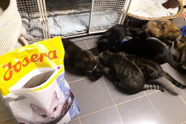Chiaras Katzenhaus
